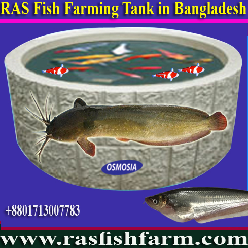 Aquaculture Ras Fish Farming System Manufacturer, Aquaculture Fish Pond Oxygen Aeration Equipment, Ras Fish Farming Projects Supplier Company in Bangladesh, Ras Fish Farming System Suppliers Company in Bangladesh, Ras Fish Farming Equipment Supplier Company in Bangladesh, Ras Fish Farming Project Equipment Manufacturer Exporter & Suppliers Company in Bangladesh, Ras Fish Farming Project Machinery Manufacturer, Ras Fish Farming Project Machinery Manufacturer Bangladesh, Ras Fish Farming Machinery Manufacturer Bangladesh