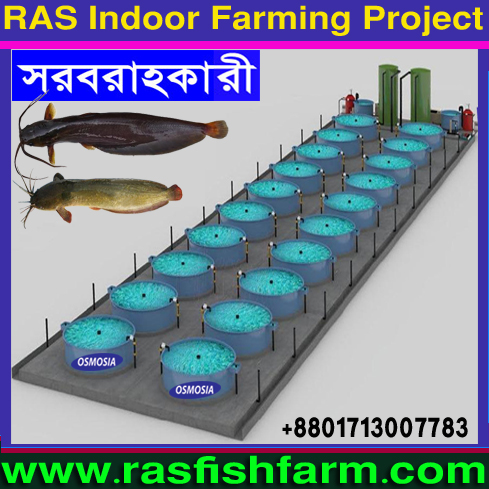 Bangladesh RAS Fish Farming Equipment Suppliers Company, RAS Fish Farming Equipment Suppliers Company, RAS Fish Farming Equipment Suppliers Company in Bangladesh, RAS Fish Farming Machinery Suppliers Company in Bangladesh, RAS Fish Farming Product Suppliers Company in Dhaka Bangladesh, RAS Fish Farming Machinery in Bangladesh, RAS Fish Farming Projects Machinery in Bangladesh, Mini RAS Fish Farming Projects Machinery in Bangladesh, Small RAS Fish Farming Project Machinery in Bangladesh