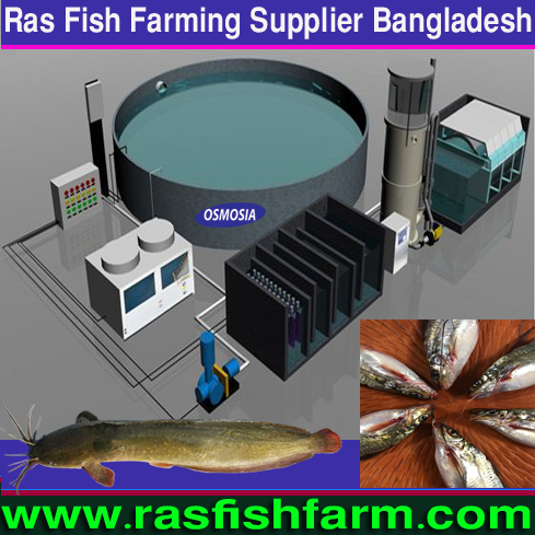Ras Fish Farming System Suppliers in Saudi Arabia, Ras Fish Farming System Suppliers in Gulf Country, Ras Fish Farming System Suppliers in Africa, Ras Fish Farming System Equipment Suppliers in Africa, Ras Fish Farming System Equipment Suppliers in Pakistan, Ras Fish Farming System Equipment Suppliers in China, Ras Fish Farming Systems Equipment Suppliers in India, Ras Fish Farm System, Ras Fish Farm Systems in Bangladesh, Ras Fish Farm Systems Price in Bangladesh, Ras Fish Farm System Suppliers in Bangladesh