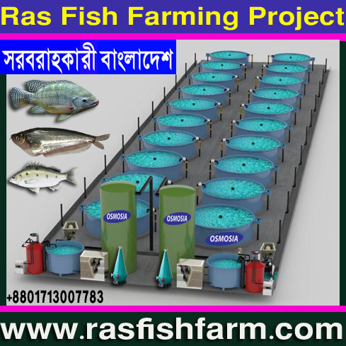 Bangladesh RAS Fish Farming Equipment Supplier Company, RAS Fish Farming Equipment Supplier Company, RAS Fish Farming Equipment Suppliers Company in Bangladesh, RAS Fish Farming Machinery Supplier Company in Bangladesh, RAS Fish Farming Product Suppliers Company in Bangladesh, RAS Fish Farming Machinery in Bangladesh, RAS Fish Farming Project Machinery in Bangladesh, Mini RAS Fish Farming Project Machinery in Bangladesh, Small RAS Fish Farming Project Machinery in Bangladesh
