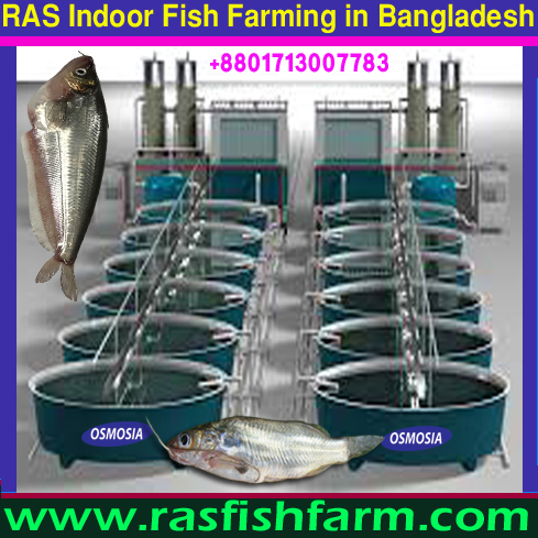 Ras Fish Farming Project, Ras Fish Farming Project in Bangladesh, Ras Fish Farming Project Price in Bangladesh, Ras Fish Farming Project Supplier in Bangladesh, Ras Fish Farming Project Supplier in Iran, Ras Fish Farming Project Supplier in Saudi Arabia, Ras Fish Farming Project Suppliers in Gulf Country, Ras Fish Farming Project Suppliers in Africa, Ras Fish Farming Project Equipment Supplier in Africa, Ras Fish Farming Project Equipment Supplier in Pakistan, Ras Fish Farming Project Equipment Supplier in China, Bangladesh Fish Farming Equipment Supplier Company